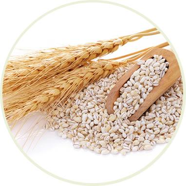 大麦乳酸発酵液GABA
